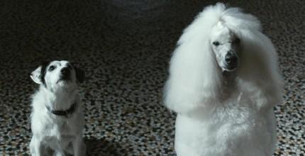 harvey.kutya