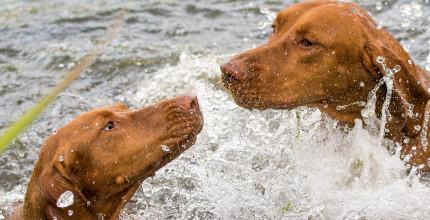strand.kutya.kutyatar