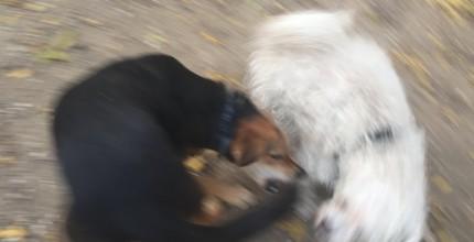 kutya.1
